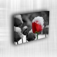 Doku Canvas Baskı Çiçek- CIGE001