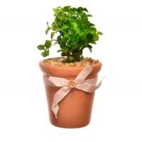 Decotown Seramik Saksıda Yeşil Yapay Çiçek