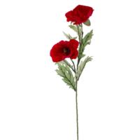 Euro Flora Gelincik 79 Cm