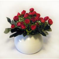 Kırmızı Tomurcuk Güller