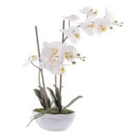 Loveq Orkide Saksıda 47,5 Cm Drn-64027