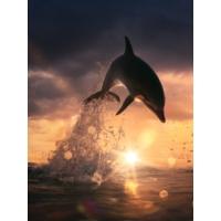 Iwall Denizaltı Resimli Dikey Tek Parça IDS-3503-DİKEY-1 Duvar Kağıdı
