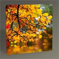 Tablo 360 Flowers İn Autumn Tablo 30X30