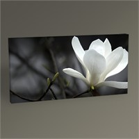 Tablo 360 Magnolia Flower Tablo 60X30