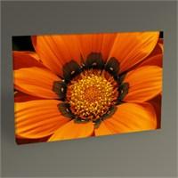 Tablo 360 Gazania Flower Tablo 45X30