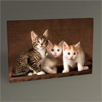 Tablo 360 Cats Tablo 45X30
