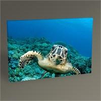 Tablo 360 Deniz Kaplumbağası Tablo 45X30