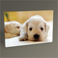 Tablo 360 Dogs Tablo 45X30