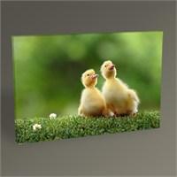 Tablo 360 Ördek Yavruları Tablo 45X30