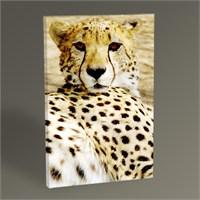 Tablo 360 Cheetah Tablo 45X30