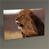 Tablo 360 Lion Tablo 45X30