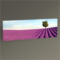 Tablo 360 Lavender Field Tablo 60X20