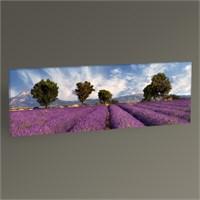 Tablo 360 Lavender Field Iı Tablo 60X20