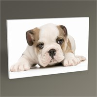Tablo 360 Bulldog Dog Tablo 45X30