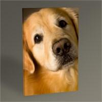 Tablo 360 Golden Dog Tablo 45X30