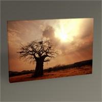 Tablo 360 Baobab Ağacı Tablo 45X30