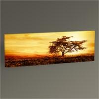 Tablo 360 Büyük Afrika Ağacı Tablo 60X20