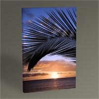 Tablo 360 Gün Batımı Ve Palmiye Yaprakları Tablo 45X30