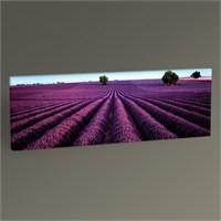 Tablo 360 Lavender Field Iıı Tablo 60X20