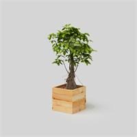 Onlywood Flower Box Saksı Natural