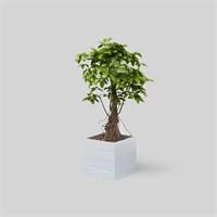 Onlywood Flower Box Saksı Beyaz