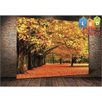 Tablo İstanbul Ağaçlar Sonbahar Yapraklı Led Işıklı Kanvas Tablo 45 X 65 Cm