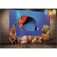 Tablo İstanbul Balık Deniz Balıkları Led Işıklı Kanvas Tablo 45 X 65 Cm