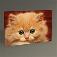 Tablo 360 Sarı Kedi Tablo 45X30