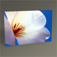 Tablo 360 Beautiful Tulip Tablo 45X30