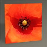 Tablo 360 Red Poppy Tablo 100X100