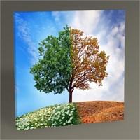 Tablo 360 Dört Mevsim Ağaç Tablo 30X30