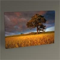 Tablo 360 Trees And Sunset Iı Tablo 45X30