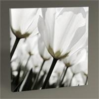 Tablo 360 Beyaz Laleler Tablo 30X30