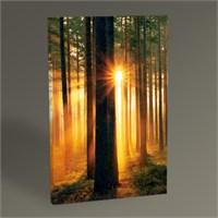 Tablo 360 Forest Sunbeams Tablo 45X30