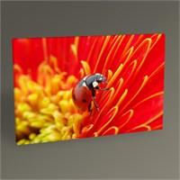 Tablo 360 Uğur Böceği Tablo 45X30