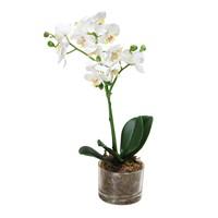 Altıncı Cadde Saksılı Orkide Beyaz 47 Cm