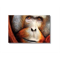 Tictac Maymun Kanvas Tablo - 60X90 Cm