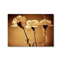 Tictac Beyaz Menekşeler 1 Kanvas Tablo - 50X75 Cm