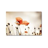 Tictac Kırmızı Gelincik Kanvas Tablo - 50X75 Cm