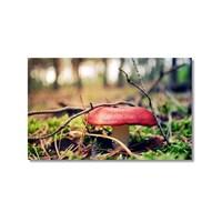 Tictac Kırmızı Mantar Kanvas Tablo - 50X75 Cm