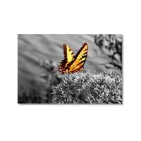 Tictac Sarı Kelebek 4 Kanvas Tablo - 50X75 Cm