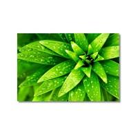 Tictac Yeşil Yapraklar Kanvas Tablo - 60X90 Cm