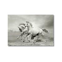 Tictac Koşan Beyaz Atlar Kanvas Tablo - 60X90 Cm