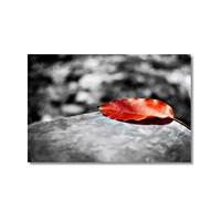 Tictac Kırmızı Yaprak Kanvas Tablo - 60X90 Cm