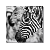 Tictac Zebra 2 Kanvas Tablo - 60X60 Cm