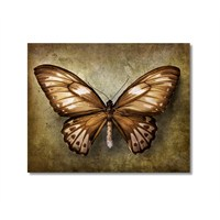 Tictac Kahverengi Kelebek Kanvas Tablo - 60X60 Cm