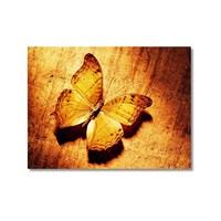 Tictac Sarı Kelebek 2 Kanvas Tablo - 50X50 Cm