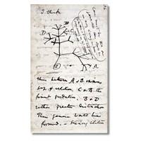 Tictac Evrim Ağacı Kanvas Tablo - 60X120 Cm