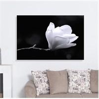 Beyaz Çiçek Dekoratif Kanvas Tablo
