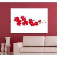 Kırmızı Çiçekler Dekoratif Kanvas Tablo